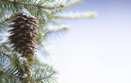 evergreen branch: Navidad de tarjetas de felicitaci�n Foto de archivo