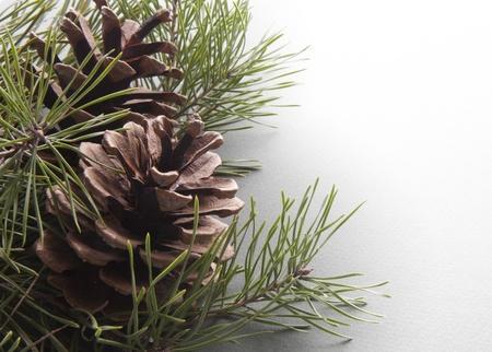 pomme de pin: arbre de Noël