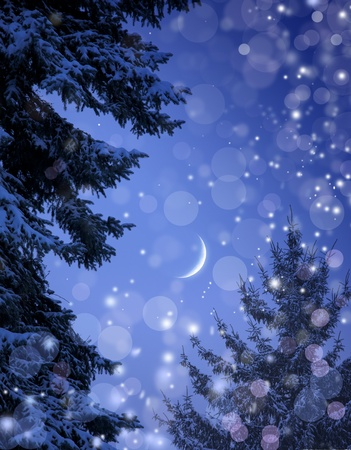 winter night: Snowy forest on Christmas night  Stock Photo