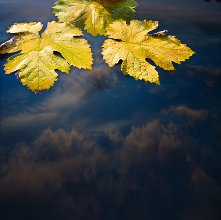 Autumn leaves and water abstract background Stock Photo - 10525477