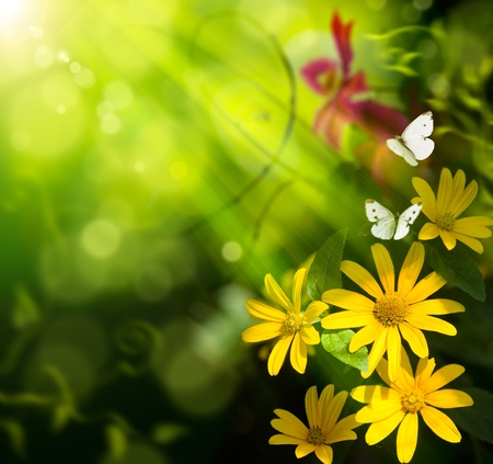 Abstract summer background. Flower and butterfly photo