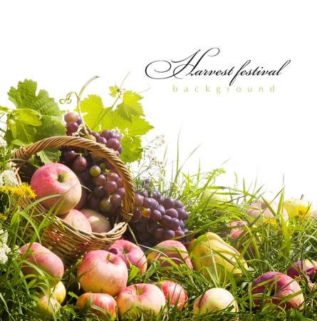 포도 수확: 잔디에 과일과 추상 가을 배경