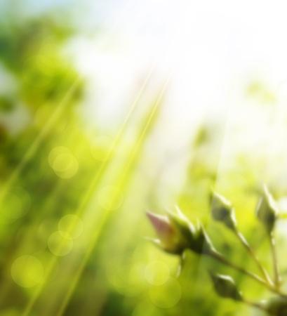 blinking: spring background
