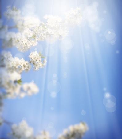 art spring background photo