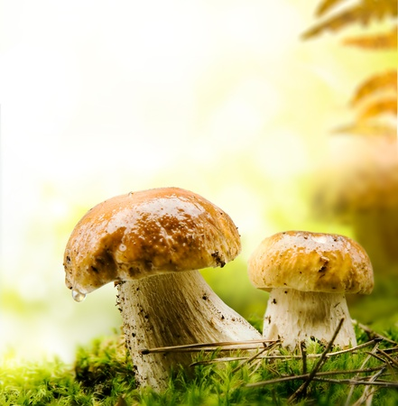 rain forest background: autumn forest mushrooms Stock Photo