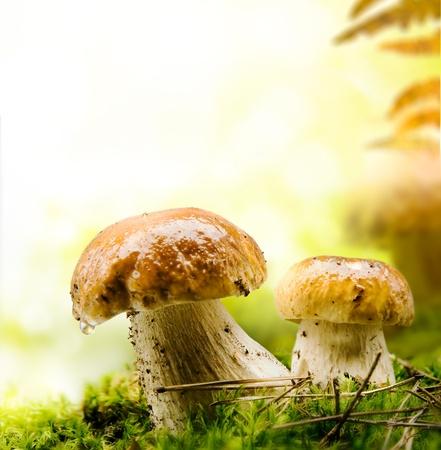 funghi: autunno bosco funghi Archivio Fotografico
