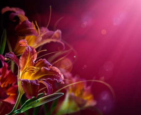 abstract flowers: Art Flowers on a red background .With copy-space  Stock Photo