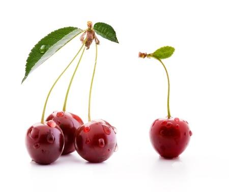cherries isolated: art ripe cherries isolated on white background