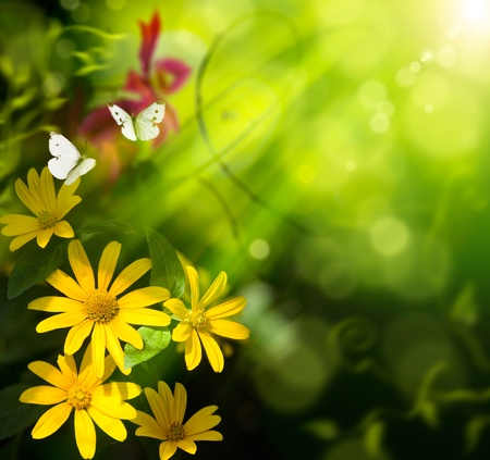 yellow flower: Abstract summer background. Flower and butterfly Stock Photo