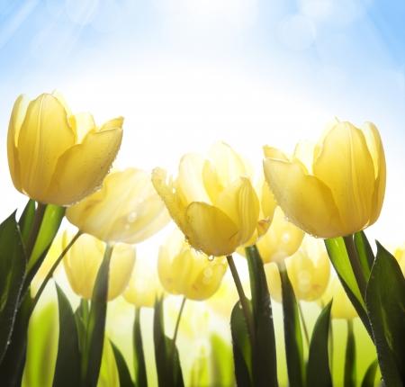 dzikie kwiaty pokryte rosą w słońcu