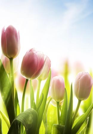 wild flowers: wilde bloemen bedekt met dauw in het zonlicht