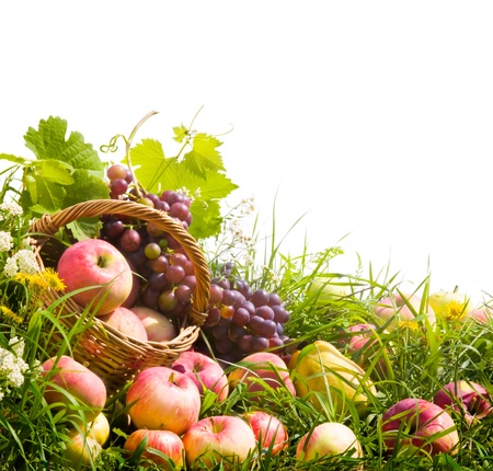 canasta de frutas: cesta de manzanas y uvas sobre la hierba verde Foto de archivo