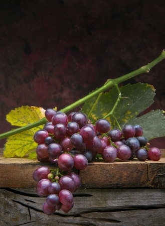 Art bunch  grapes with leaves on dark background photo