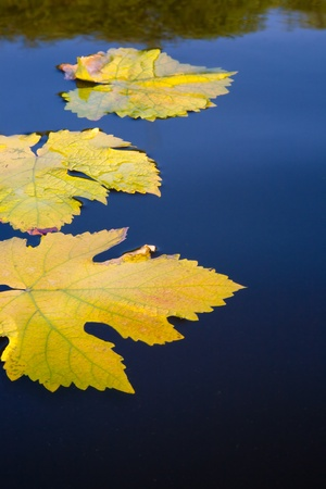 Autumn leaves and water abstract background photo