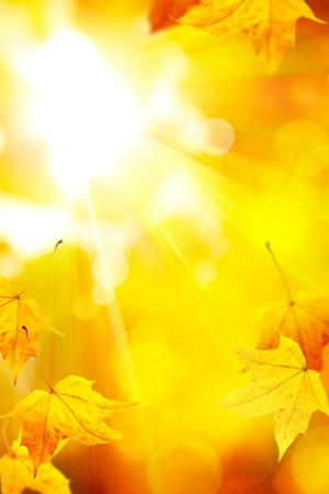 fall leaves on white: the sun