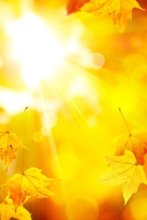 autumn colors: the sun