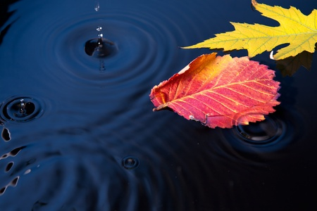 Beautiful autumn leaves fell into the water in the autumn rain photo