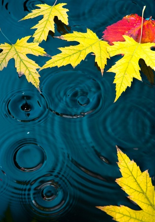 abstract autumn background with yellow leaves fallen on the water photo