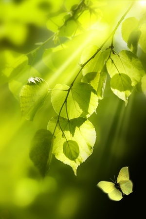 Background leaves green photo