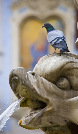 Traditional Roman picture. The pigeon and a fountain Stock Photo - 10656897
