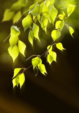 Background leaves green Stock Photo - 10656809