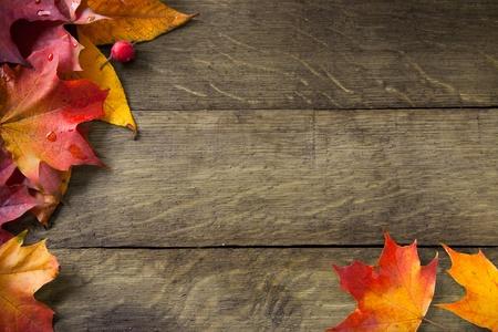 amarillo otoño húmedo deja en el fondo de un antiguo bosque oscuro