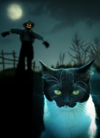 espantapajaros: Halloween, hombre de paja en un campo de pie en la caída de la noche y el gato negro Foto de archivo
