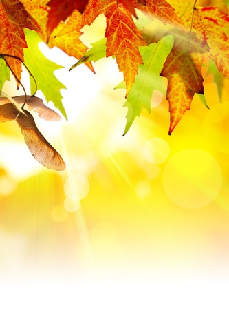 autumn background with yellow leaves of autumn  tree lit by the sun photo