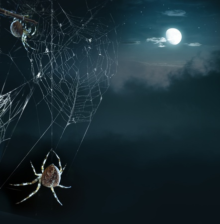spiderweb: Party horrible spiders in Halloween night Stock Photo