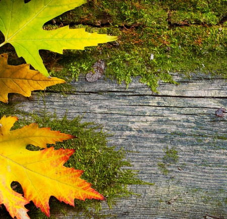 yellow wet autumn leaves on the grunge old wood background  photo