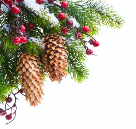 branch of the Christmas tree sheltered snow isolated on white background Stock Photo - 11216346