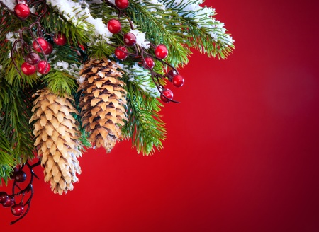 branch of the Christmas tree sheltered snow  on red background Stock Photo - 11316858