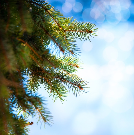 sheltered: Christmas tree branch on a blue background Stock Photo