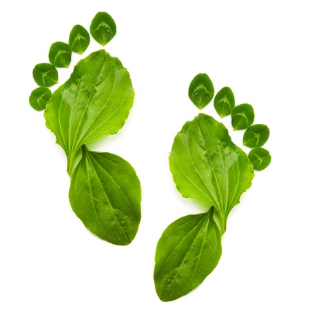 conservacion del agua: la primavera abstracta ecolog�a verde s�mbolo de los pies de impresi�n