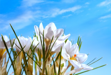 Art Beautiful Spring Flowers on blue sky background photo
