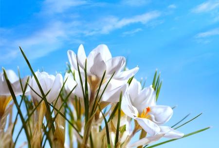 Art Beautiful Spring Flowers on blue sky background Stock Photo - 12393427