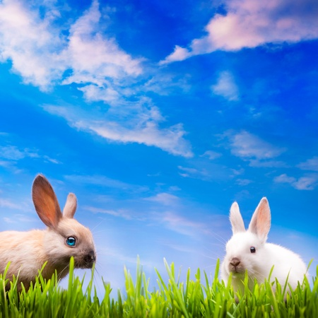 two little Easter rabbits  on green grass photo