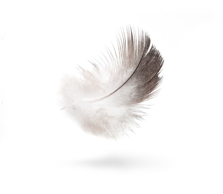 dove white feathers isolated on white background Stock Photo - 12393421