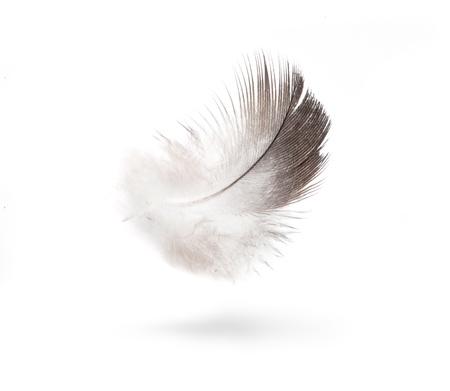 noun: dove white feathers isolated on white background  Stock Photo