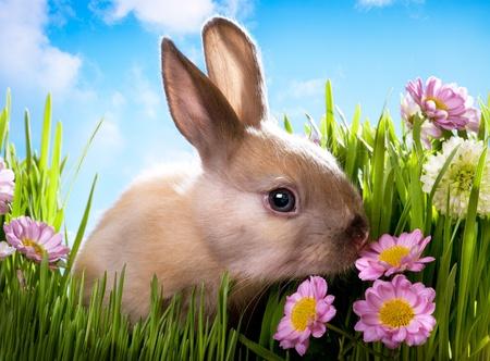 lapin blanc: lapin de Pâques bébé sur l'herbe verte avec des fleurs de printemps Banque d'images