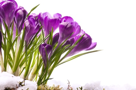 art Beautiful Spring Flowers  photo