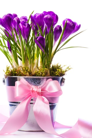 Beautiful spring flowers in bucket decorated with ribbon photo