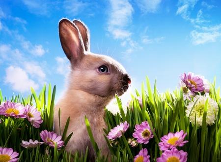 art bébé lapin de Pâques sur l'herbe verte du printemps Banque d'images