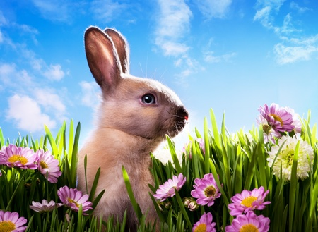 art baby Easter bunny on spring green grass Stock Photo