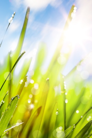 Spring or summer abstract nature background with grass and blue sky Stock Photo - 12782450