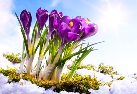 art Spring florwer background photo