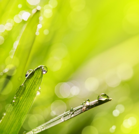Spring or summer abstract nature background with grass and blue sky Stock Photo - 12782449