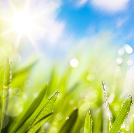 abstracts of natural spring green background photo