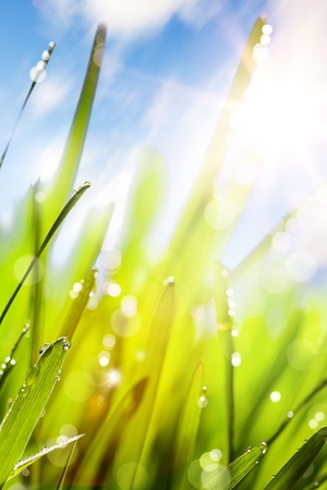 Spring or summer abstract nature background with grass and blue sky Stock Photo - 12782467