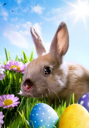 baby rabbit: easter Baby rabbit and easter eggs Stock Photo